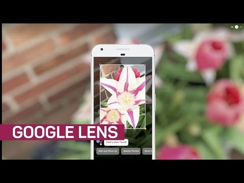 Google Lens is smart enough to identify flower species