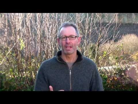 January on Peter's Plot: Creating a Super Low Maintenance Veg Plot