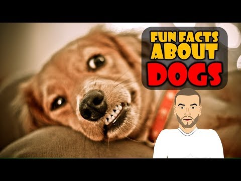 Do you love dogs? We do! Check out our Top 5 Dog Fun Facts about dogs for kids
