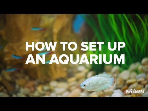 How to Set Up an Aquarium