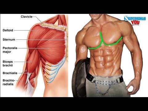 How To Get The Outer Chest Line
