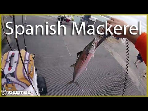 [Pier Fishing #45] Okaloosa Island Fishing Pier - Destin, FL (MAY 13, 2016) -  Spanish Mackerel