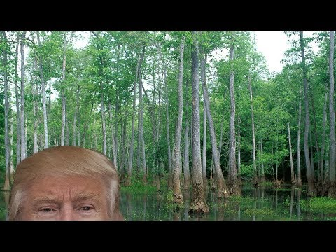 The Water Is Rising In Trump's Swamp