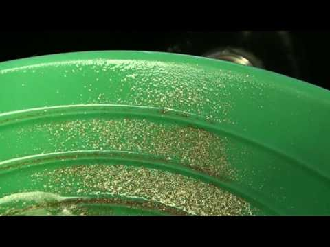 Gold panning. Is that gold?
