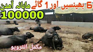 buffalo farming in Pakistan 2019 / information about buffalo in Urdu / diary farm