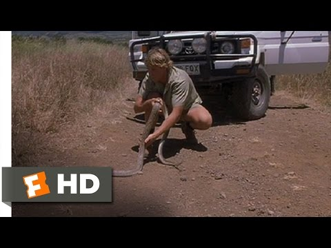 The Crocodile Hunter: Collision Course (7/10) Movie CLIP - King Brown Snake (2002) HD