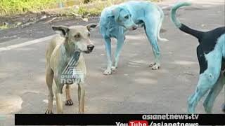 Dogs in Navi Mumbai are turning blue because of effluents in the Kasadi river