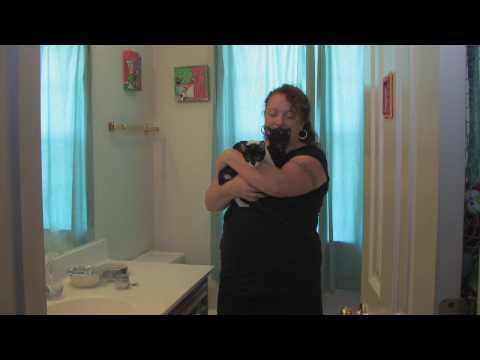 Cat Care : Chronic Feline Sneezing