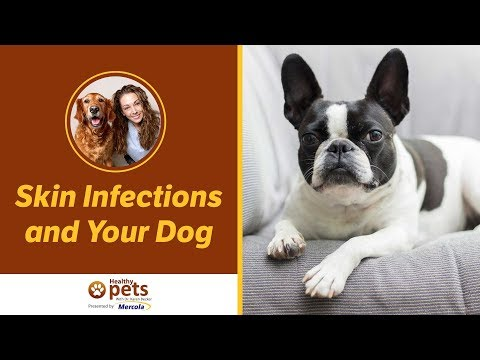 Skin Infections and Your Dog