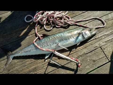 2015-2016 Pier Fishing - NC  - Red Drum & King Mackerel Photo Highlights
