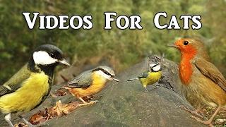 Videos for Cats to Watch Spectacular : Video för Katter att Titta på Fåglar