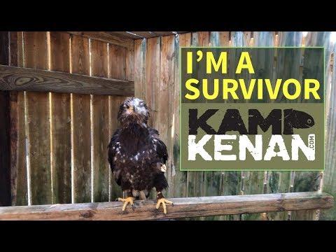 Cancer Surviving American Bald Eagle!