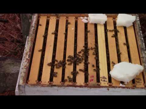 Winter feeding bees 2