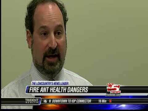 fire ant allergies   Dr Davidson 10 9 13