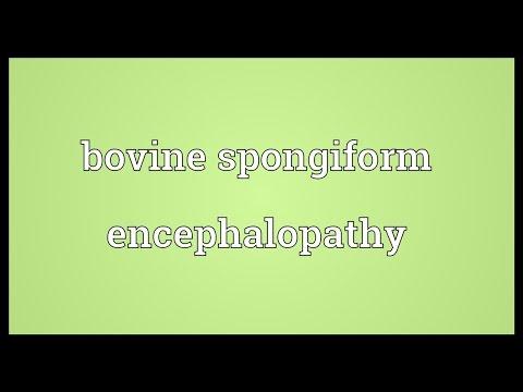 Bovine spongiform encephalopathy Meaning