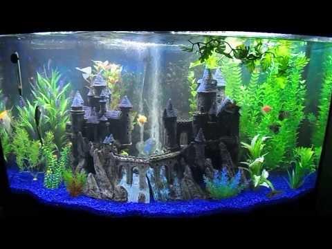 My New 46 Gallon Bow Front Aquarium