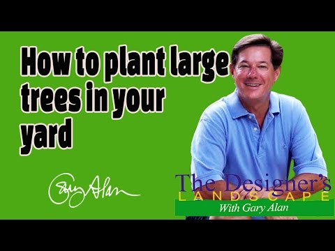 How to plant large trees in your yard Designers Landscape#621