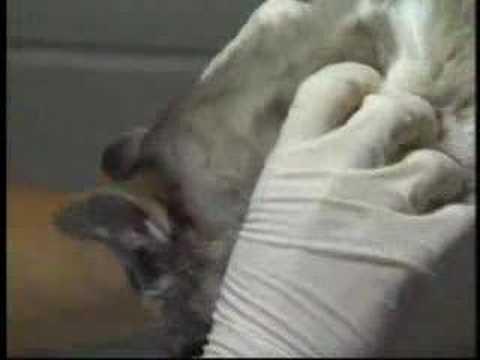 Avian Flu in Pets