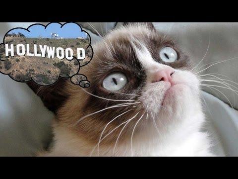 Grumpy Cat Headed To Big Screen?