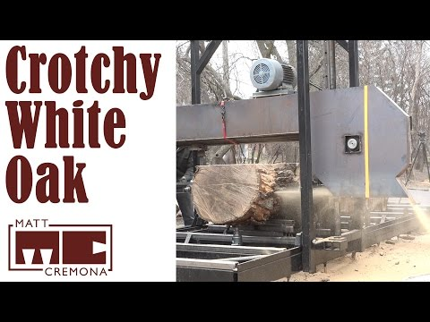 Crotchy White Oak Log (Big Logs #3)