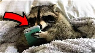 25 Craziest Animals Caught Red Handed !