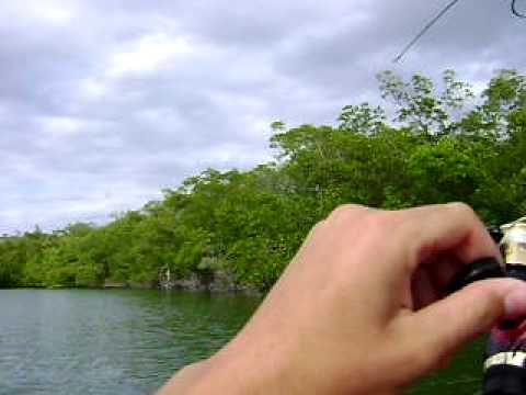 Reeling in a Pin Fish