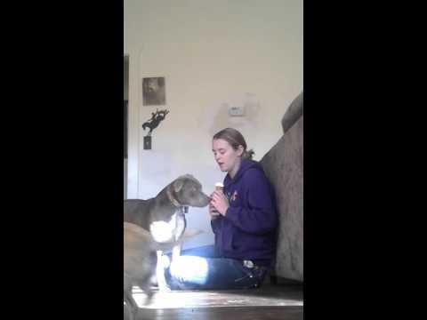 Service Dog getting meds