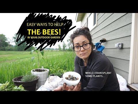 Outdoor Garden Tips [How To Help Bees]