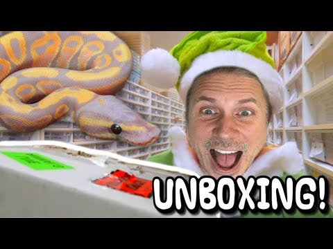 UNBOXING SNAKES DRESSED AS AN ELF??   BRIAN BARCZYK