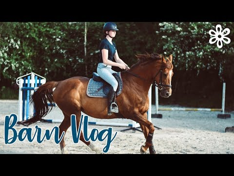 ALL THE HORSES ARE IN WORK! // Barn Vlog