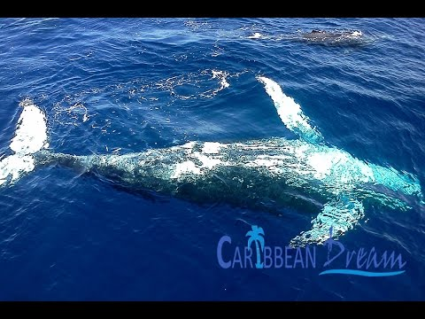 Whale Watching in Samana by Plane | Punta Cana Tours