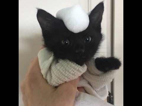 How to give a kitten or cat a bath without drama or stress!