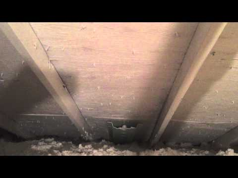 Selling A Home When Attic Mold Is Discovered During Inspection Addison, IL