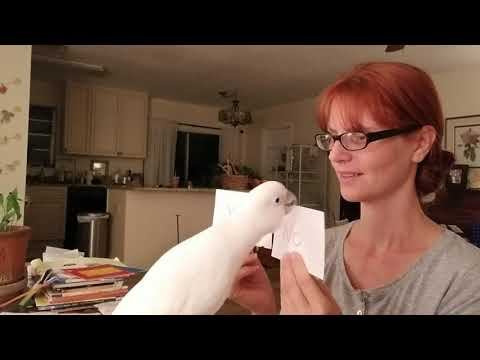 Cockatoo Ellie talking about birth and babies is freaking adorable!