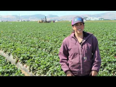 CA Ag Careers: Pest Control Advisor, Certified Crop Advisor