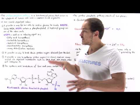 Introduction to Pentose Phosphate Pathway