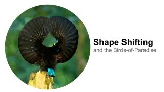 Shape Shifting: and the Birds-of-Paradise