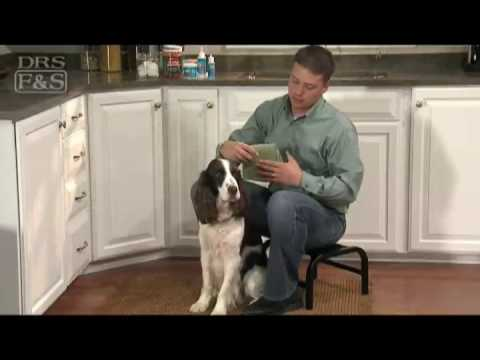 How to Clean Your Dog's Ears (DrsFosterSmith)