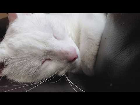 I love the sound our deaf cat makes.