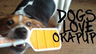 Pennie & Lyla try Orapup & 25% off discount!