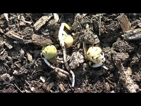 Pt. 2 Update - BREAKING #1 RULE in WOOD CHIPS gardening. Can I plant directly into wood chips ?