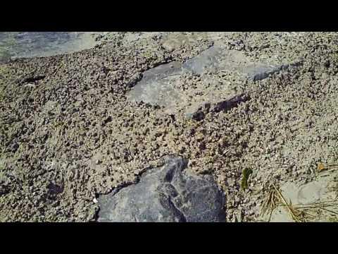 Insignia 720p HD Test: At the Beach