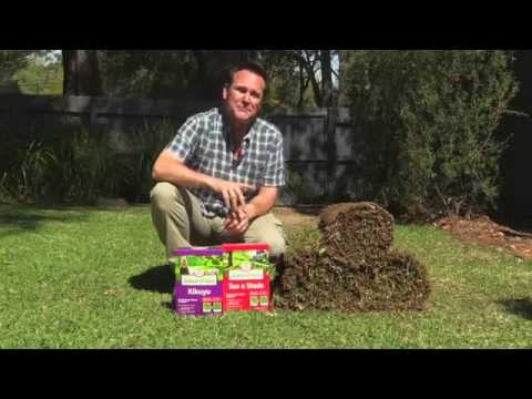 How to lay a new lawn. Quick & easy!