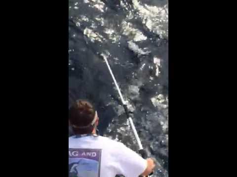 OffShore Grouper Charleston | Fish Grouper OffShore Charleston | Charter Boat OffShore Fishing