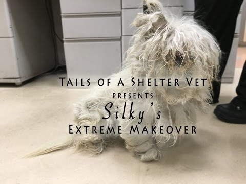 Silky's Extreme Makeover - Tails of a Shelter Vet