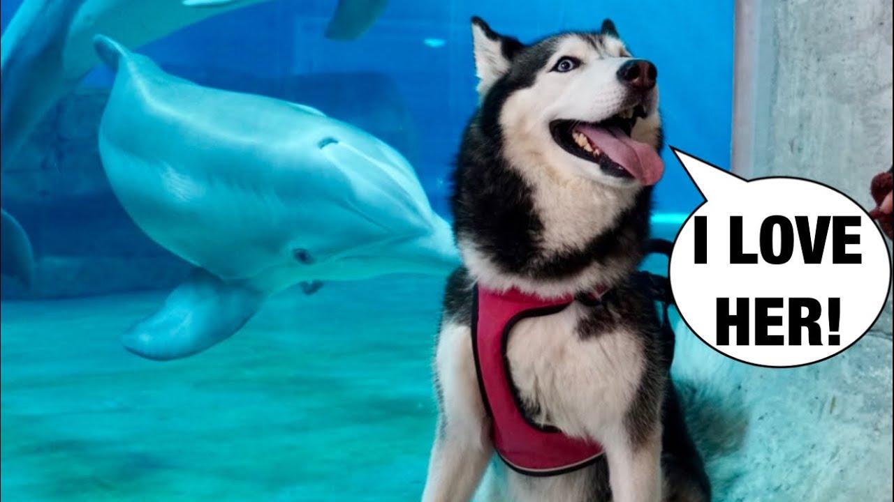 Meeka The Husky Meets Winter The Dolphin! (New BFFs!) 😍