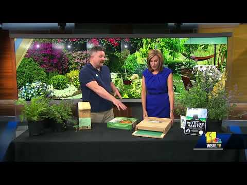 How to create a wildlife habitat garden