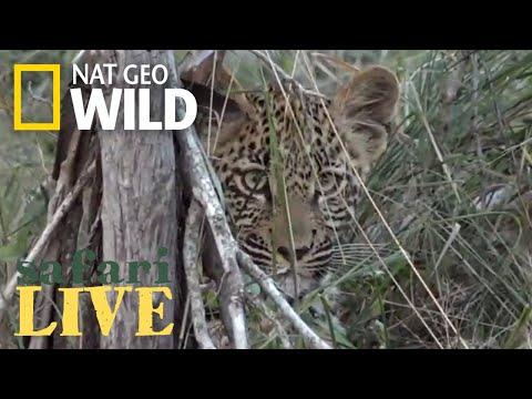 Safari Live - Day 152 | Nat Geo Wild
