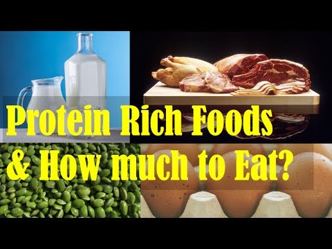 Best Sources of Protein: Plant Based and Animal Based