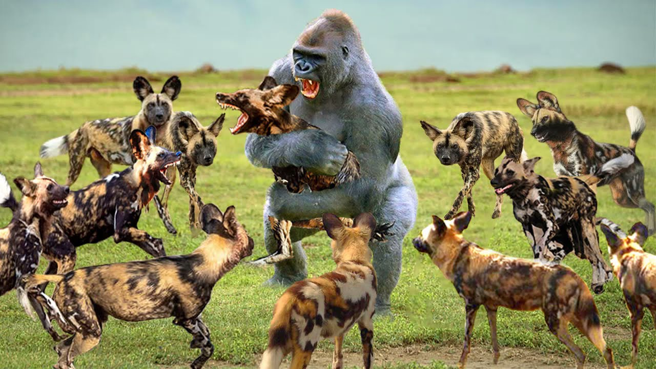 Unbelievable. Monkey Turned Wild Dog Into His Game - Baboon Vs Wild Dog, Leopard